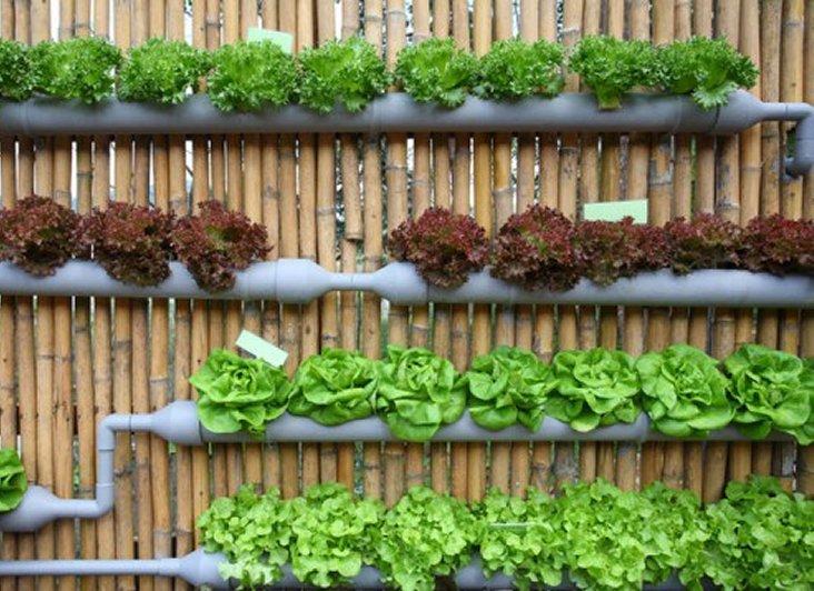 Organski vrt: Vertikalni vrt u plastičnim cijevima
