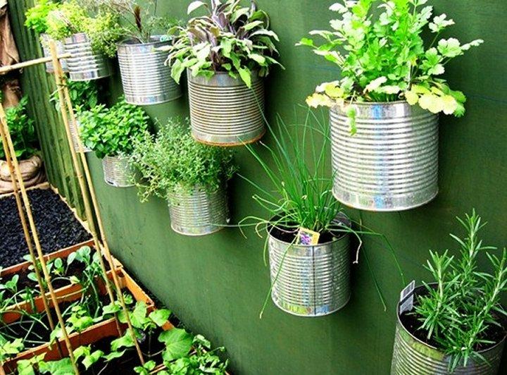Organski vrt: Prenamjena limenke za vertikalni vrt