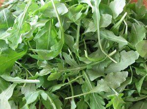 Rikula ili rikola vrlo je aromatična i izraženo gorkasta salata.