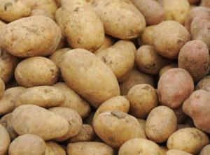 Za prehranu se koristi zreli krumpir.